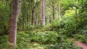 Lael Forest Walk